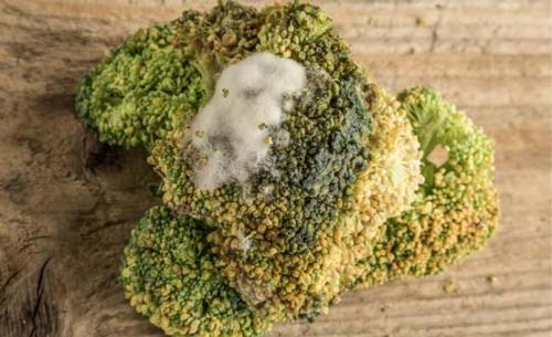 Signs That Broccoli Is Bad